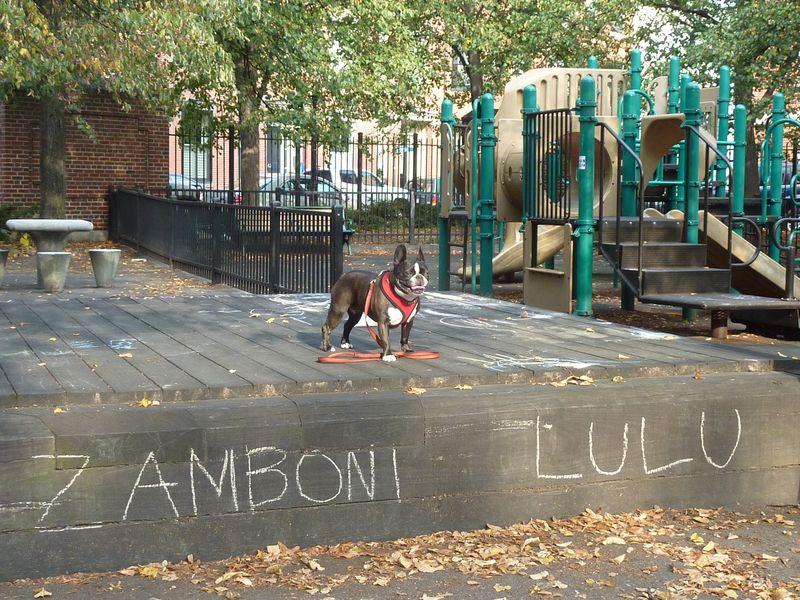 Zamboni Lulu 002