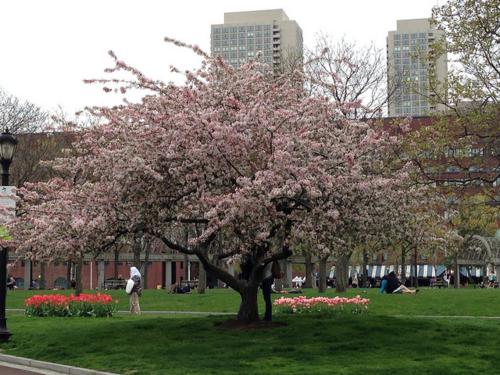 Christopher Columbus Park, Boston